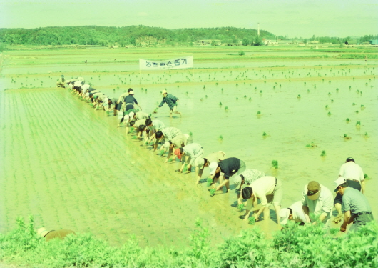 Rice planting at Byokje